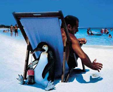 beachpenguin